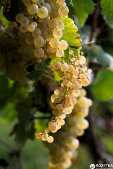 Вино Bugeuli Алазанська долина червоне напівсолодке 0.75 л 12% (4860004130068)