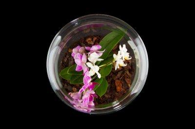 Декоративний флораріум в банку з орхідеями MossGarden Ф7