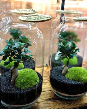 Декоративний флораріум в банку з еко-скла MossGarden Ф2