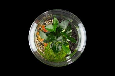 Декоративний флораріум в банку з маленьким деревом MossGarden Ф5