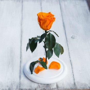 Стабілізована троянда в колбі Lerosh - Mini 27 см, Оранжевий (Б)