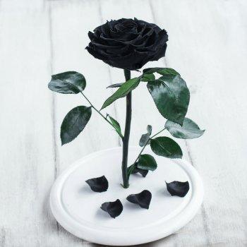 Стабилизированная роза в колбе Lerosh - Premium+ 33 см, Черный (Б)