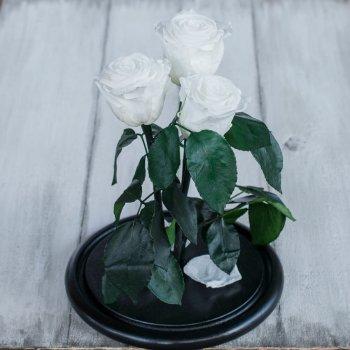 Стабилизированные три розы в колбе Lerosh - Standart 33 см, Белый