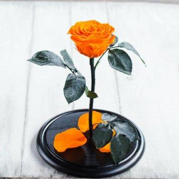 Стабілізована троянда в колбі Lerosh - Premium 33 см, Оранжевий