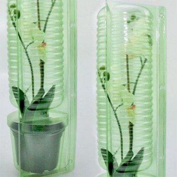 Орхідея Odontoglossum Winered Червоний Кімнатні квіти в горщику Florium (916312)