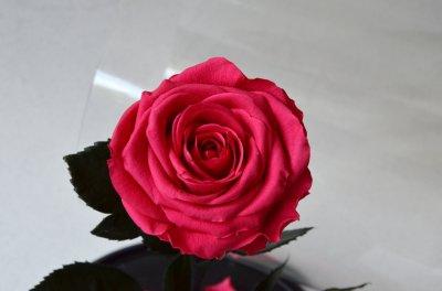 Стабилизированная роза в колбе Etoile Flora Малиновый поцелуй 33 см (33R-0801)