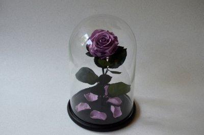 Стабилизированная роза в колбе Etoile Flora Лиловый конфитюр 33 см (33R-0812)