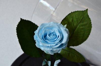 Стабилизированная роза в колбе Etoile Flora Голубая лагуна 26 см (26R-0813)