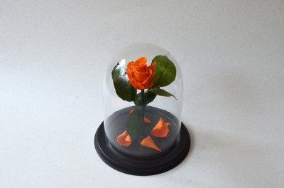Стабилизированная роза в колбе Etoile Flora, Сочный оранжевый апельсин, 26 см (26R-0804)