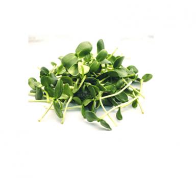 Мікрозелень Скайсмарт «Соняшник» 50 г