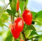 Ягоды Годжи Veganprod элитные органические 150 г (2500353001502) - изображение 2