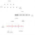 Прицел оптический Hawke Sidewinder FFP 4-16х50 сетка FFP Mil с подсветкой. 39860123 - изображение 6